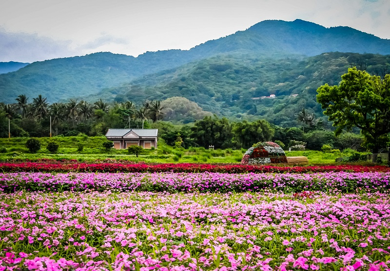 Taiwan Out-Flower Field-