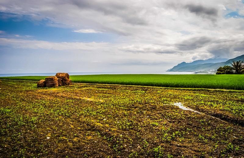 Taiwan Out-Rice Fields Taiwan East Coast-