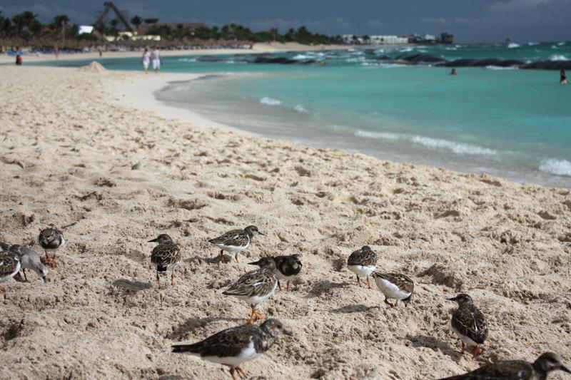 Bahia-Principe-Resort-4-by-James-Pham