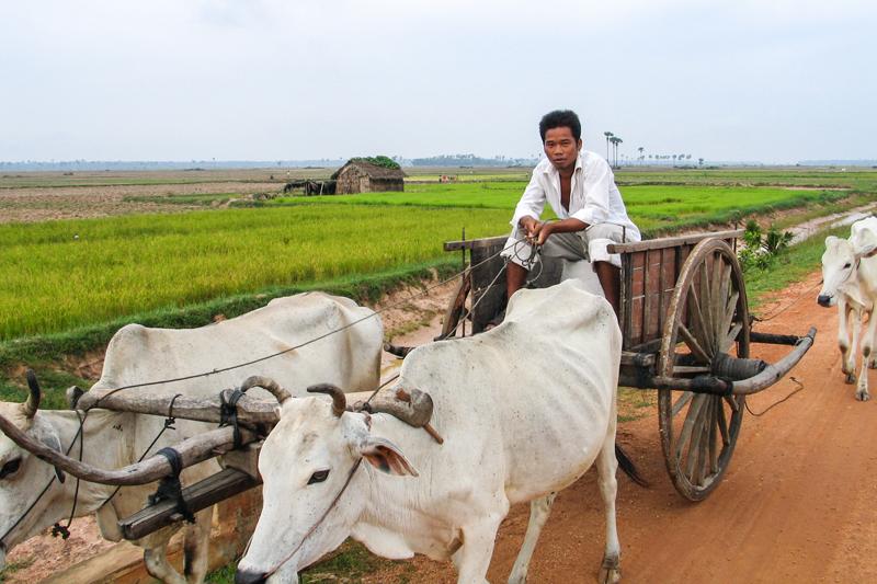 Cambodia-Oxcart