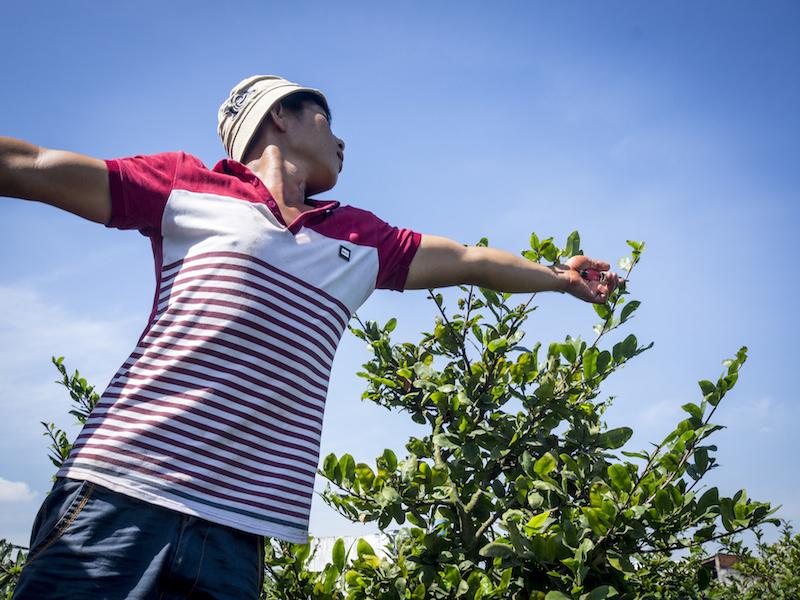 Oi Vietnam - Feb 2015_apricot grower_DSC6434_NT