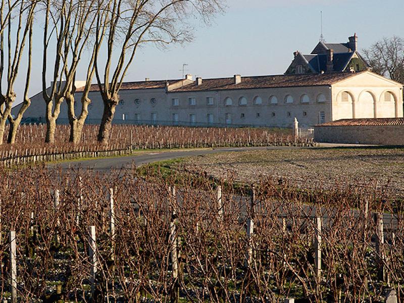 Hivers-ceps-Vignes-Mouton-Rothschild