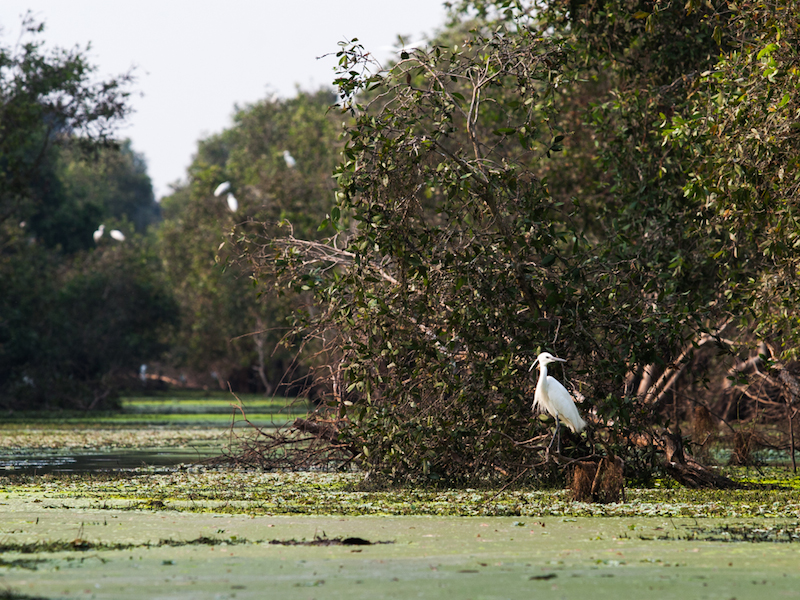Tra Su Bird Sanctuary - Waterbird 2- Image by Buffalo Tours (2)