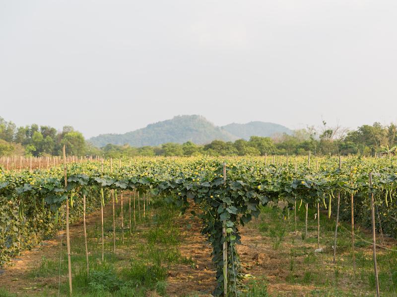 Cat Tien national park-Ta Lai village 3