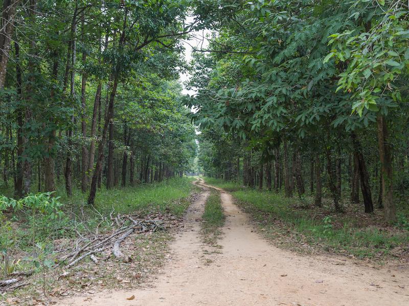 Cat Tien national park. 1