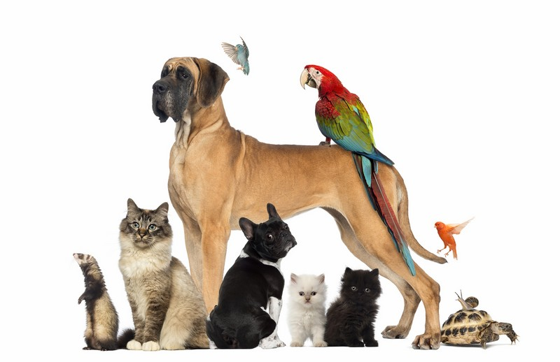bigstock-Group-of-pets-Dog-cat-bird-44783536-OiVietNam