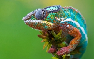 8589130420520-colorful-chameleon-wallpaper-hd