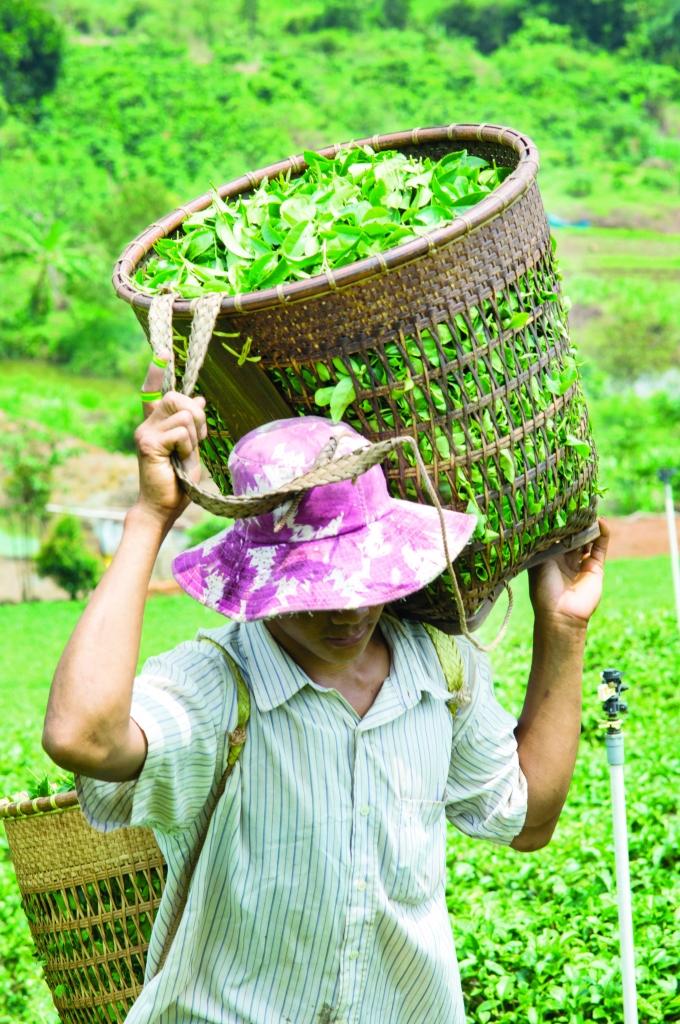 Oi Vietnam - Aug 2014 -PE_Baoloc_Tea__DSC0008