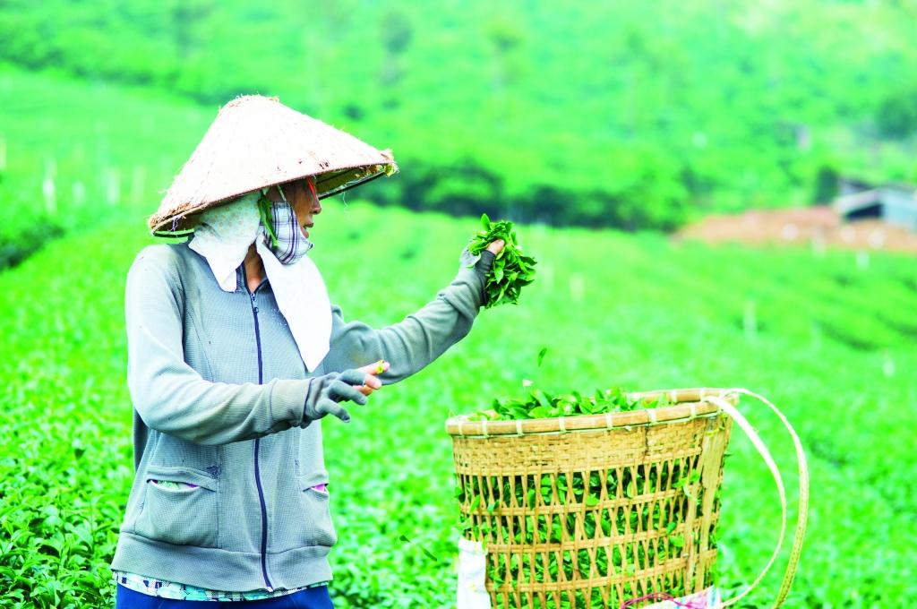 Oi Vietnam - Aug 2014 -PE_Baoloc_Tea__DSC0063