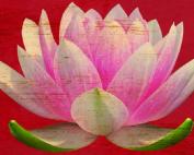 rsz lotusland-1024x465