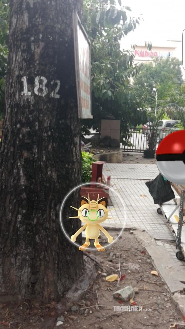 pokemon-go-viet-nam-meowth-11