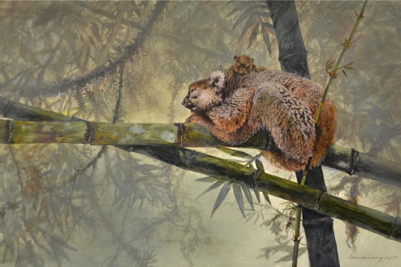 SIESTA: Greater bamboo lemur, Madagascar