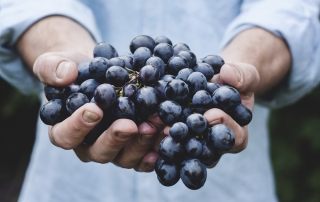 BON-VIVANT.-red-grapes-in-hands-for-organic-wine-production