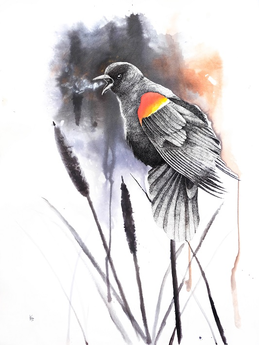 rw blackbird c
