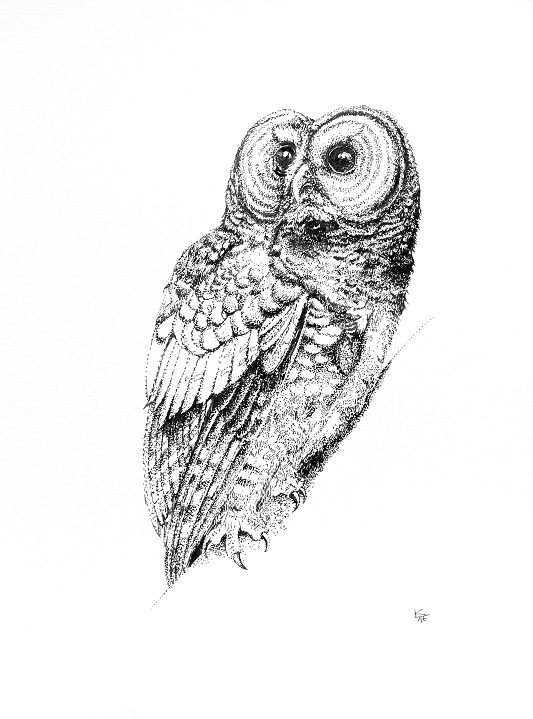 spotted owl print