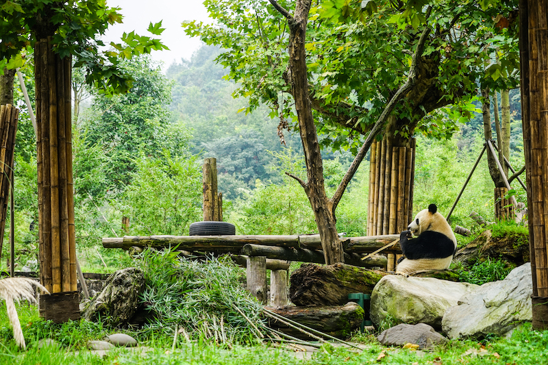12c - Dujiangyan Panda Center