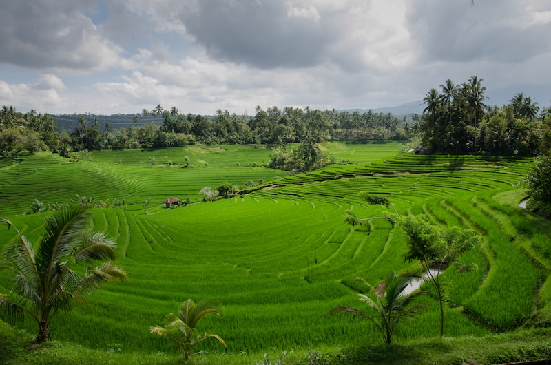 agriculture-asia-bali-654